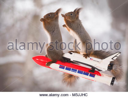 Red squirrels on an rocket with Space Shuttle - Stock Photo