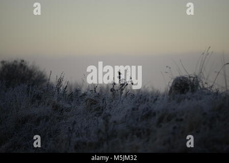 A lonely Stonechat sings in  winter at dawn - Stock Photo