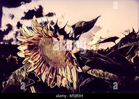 Drawing of sunflower at sunset - Stock Photo