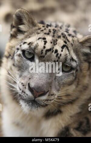 Tama Zoological Park,Tokyo - Stock Photo