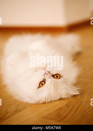 Upside down kitty - Stock Photo