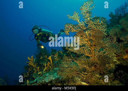 Scuba diver at a deep water sea fan, coral reef at Cozumel island, Mexico, Caribbean - Stock Photo