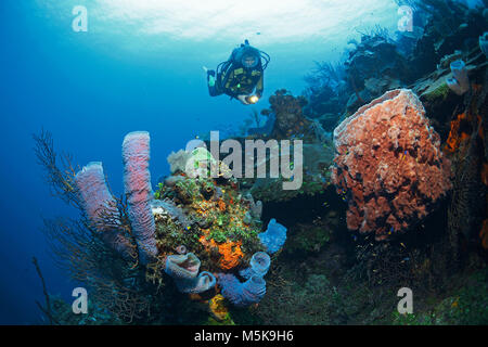 Scuba diver at a caribbean coral reef with colourful sponges, Palmetto Bay, Roatan island, Bay islands, Honduras, - Stock Photo