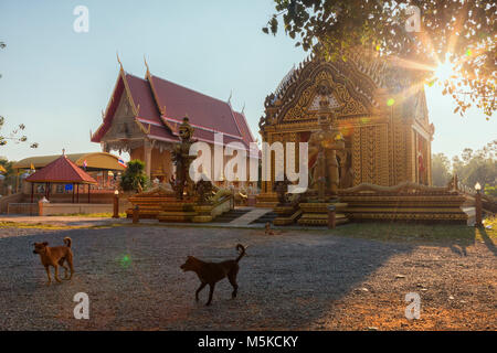 stray dogs at a buddhist temple in southern Thailand - Stock Photo