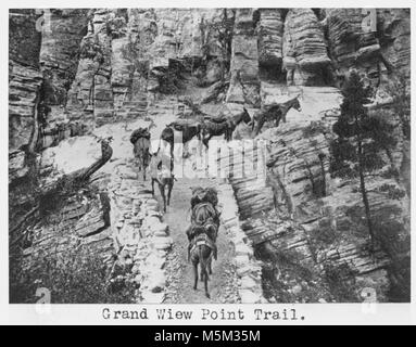 Grand Canyon Historic Grandview Trail . MULE PACK TRAIN CLIMBS THE 'FILL TO THE ISLAND' ON THE GRANDVIEW TRAIL (COCONINO). - Stock Photo