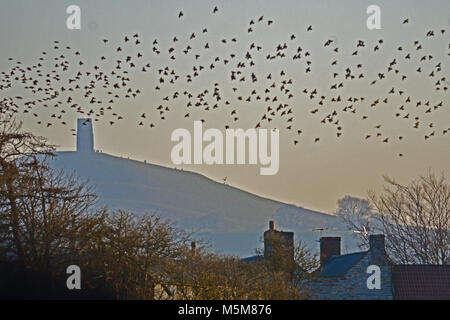 Glastonbury, UK, 24 Feb 2018. UK Weather. On the road to Coxley starling fly past Glastonbury Tor in the background,on a cold winters afternoon. Robert Timoney/Alamy/Live/News