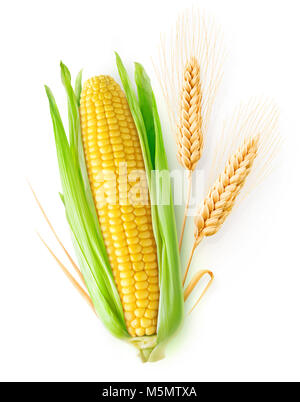 Isolated cereals. One ear of corn and two ears of wheat with leaves isolated on white background with clipping path - Stock Photo