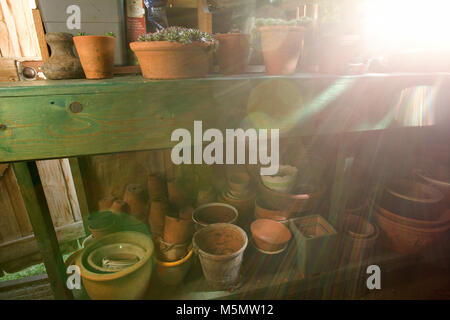 Sunlight coming through interior garden shed window. terracotta plant pots and plants - Stock Photo