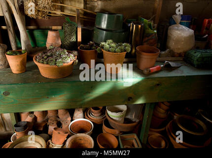 Garden shed interior with plants and plant pots - Stock Photo