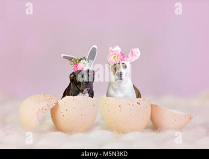 Easter dogs dressed as bunnies in egg shells - Stock Photo