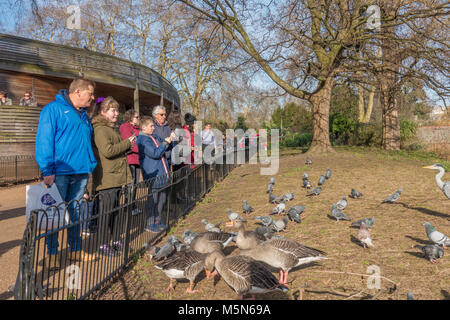 Group of visitors to St James's Park, standing by a fence watching the resident pigeons, geese and heron expecting - Stock Photo