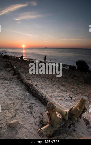 a large piece of driftwood or tree stump log on a beach washed up at sunset on the shoreline at low tide with hurst - Stock Photo