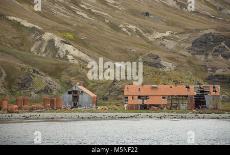 The dilapidated, rusted metal buildings of a whaling station at Stromness in South Georgia. Seals are seen on the - Stock Photo