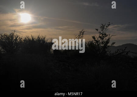 silhouettes of vegetation in the Nevada desert as the sun goes down after a hot sunny day - Stock Photo
