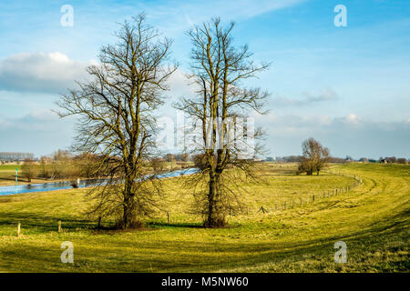 Two trees without leafs on grass fields in the german Rhine area - Stock Photo