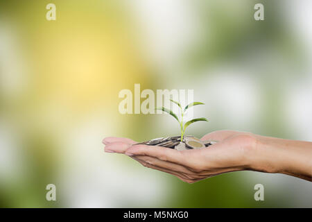 Hand holding coins with growing tree with copy space. Tree growing on Thai coins. Investment growing money for future - Stock Photo
