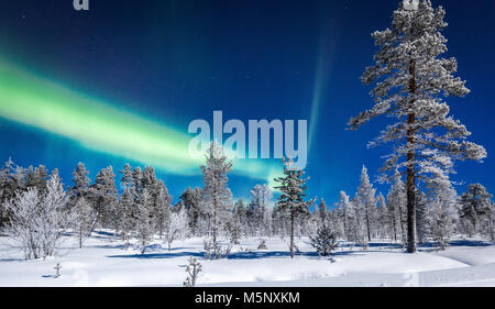 Amazing Aurora Borealis northern lights over beautiful winter wonderland scenery with trees and snow on a scenic cold night in Scandinavia