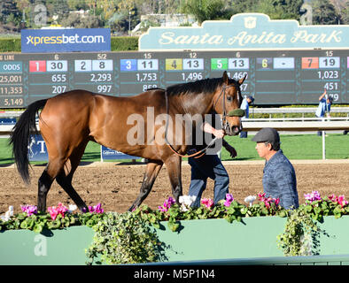 February 25, 2018 - TRIFECTA is led out of the winners circle after winning race 7 at Santa Anita Race Track, Arcadia, - Stock Photo
