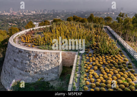 A Cactus Garden at The Getty Center , high up in the Hills at Brentwood  overlooking Westwood ,Los Angeles , California - Stock Photo