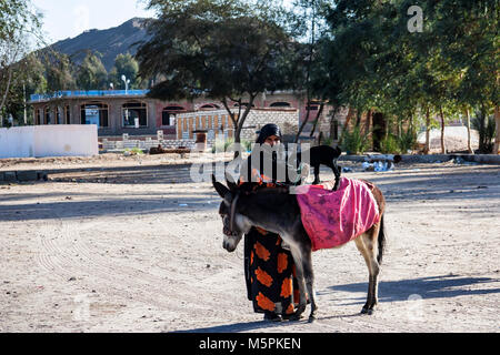 HURGHADA, EGYPT- FEBRUARY 22, 2010: Unidentified bedouin woman and mule in Egypt - Stock Photo