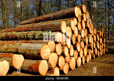 pile of felled tree trunks in woodland setting, felbrigg, norfolk, england - Stock Photo