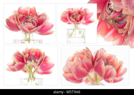 Composite (4 full-res images) tulip flowers arranged in a glass vase - Stock Photo
