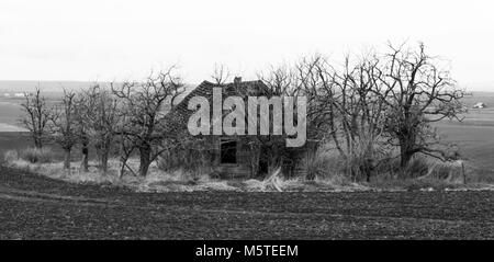 Spooky abandoned house in field surrounded by dead trees - Stock Photo