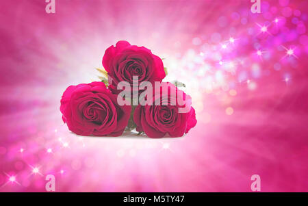 Mothering Sunday Roses for your special Mum, three beautiful pink rose heads bunched together against a white burst - Stock Photo