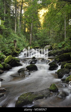 Beautiful streams and forests of the Black Forest, Germany - Stock Photo