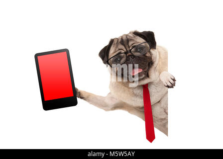 frolic business pug puppy dog with red tie and glasses, holding up tablet phone with blank red screen, hanging sideways - Stock Photo