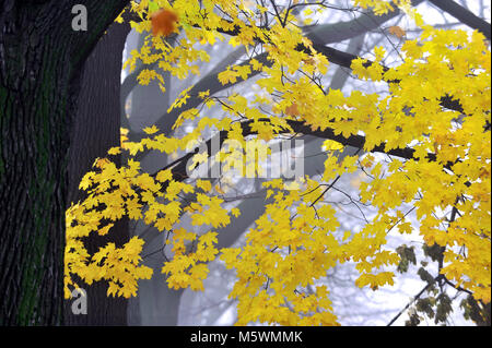 mystery, natural, nature, outdoor, root, scene, season, spooky, tree, weather, winter, wood, woodland, - Stock Photo
