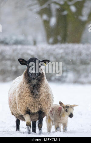 Flintshire, Wales, UK 27th February 2018, UK Weather: The beast from the East arrives with a vengeance with temperatures - Stock Photo