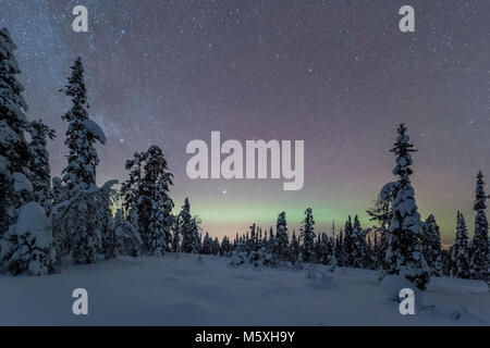 Starry sky with Milky Way and northern lights over snow-covered trees, Pyhä-Luosto National Park, Lapland, Finland - Stock Photo