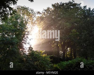 Early morning sunbeams through trees - Stock Photo