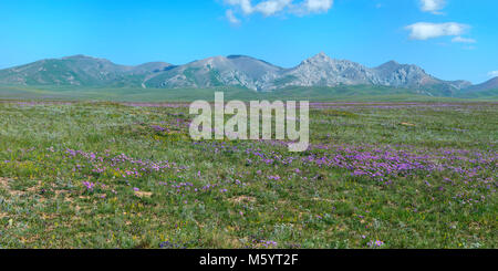 Wildflowers field in front of Tien Shan Mountain Range, Road to Song Kol Lake, Naryn province, Kyrgyzstan, Central - Stock Photo