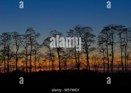 Baumreihe im Sonnenuntergang - Stock Photo