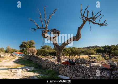 Old dead cork oak near village of Beira, Alentejo, Portugal - Stock Photo