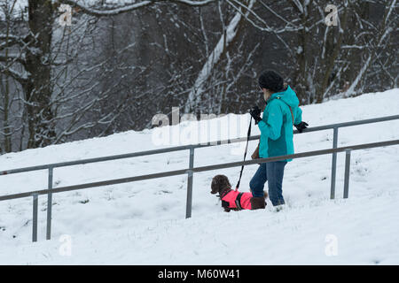 Ilkley, West Yorkshire. 27th Feb, 2018. UK Weather: Lady walking down steps with her dog on a cold, snowy winter - Stock Photo