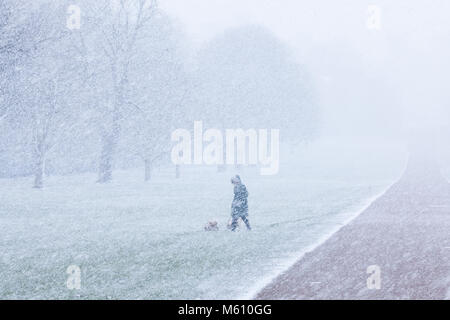 Windsor, UK. 27th February, 2018. A woman walks two dogs in blizzard conditions alongside the Long Walk in Windsor - Stock Photo