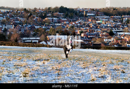Ashbourne, Derbyshire, UK. 27th February, 2018. UK Weather: Boarder Collie dog having fun running in the Beast From - Stock Photo
