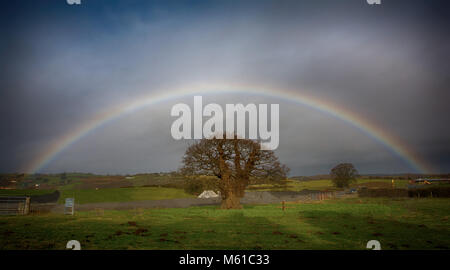 Brimmon Oak Tree (U.K &Welsh tree of the year 2016) with a perfect Rainbow over it. Feb 18. - Stock Photo