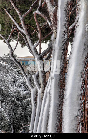 Rome, Italy. 26th February, 2018. Snow in Rome, row of snow-covered tree trunks - Stock Photo