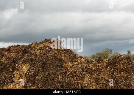 Large horse manure pile in field in Britain - Stock Photo