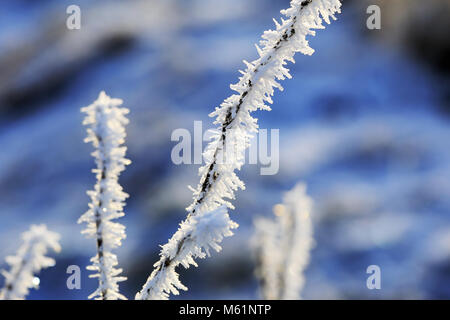Close up of hoar frost or advection frost on a small twig in winter. - Stock Photo