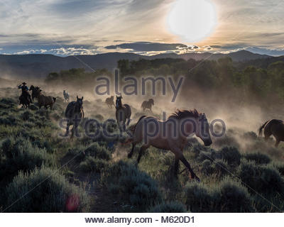 Horse herd being driven in early morning. - Stock Photo