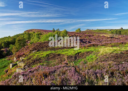 UK,Derbyshire,Peak District,Surprise View & Millstone Edge with Heather in ful bloom. - Stock Photo