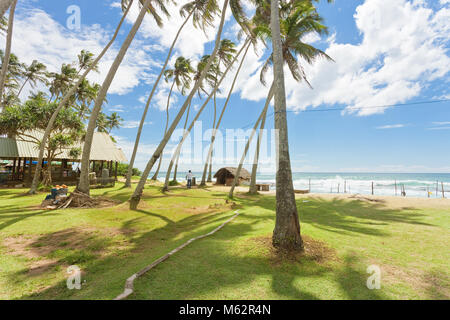 Koggala Beach, Sri Lanka, Asia - Palm trees on a meadow at Koggala Beach - Stock Photo