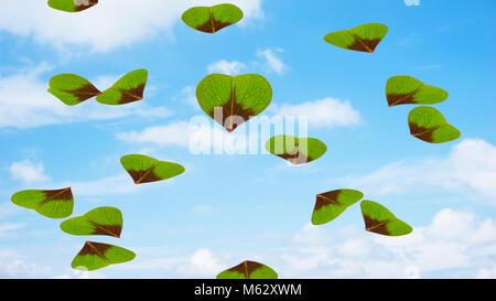 flying trefoils - Stock Photo