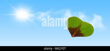 one heart shape from clover leaf in sunshine - Stock Photo