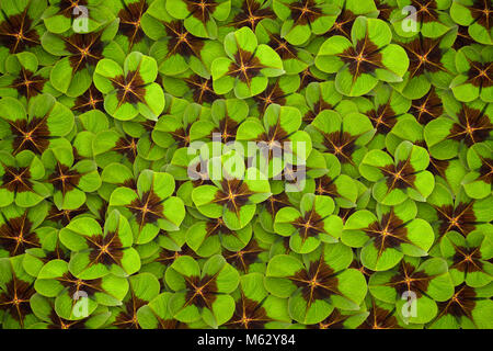 four leaf clover background - Stock Photo